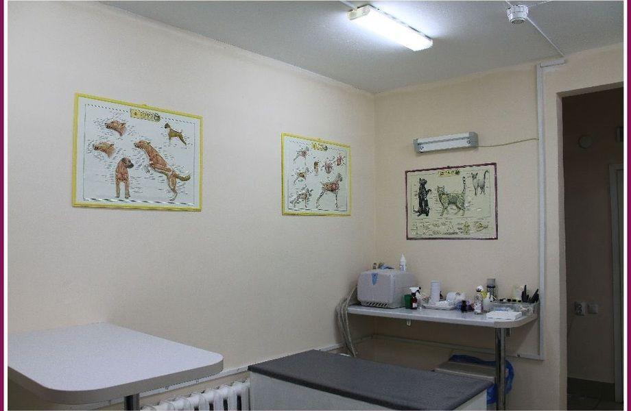 Зоомагазин + ветеринарная клиника