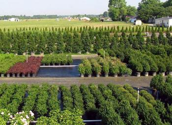 Деревообрабатывающее предприятие с хвойным питомником