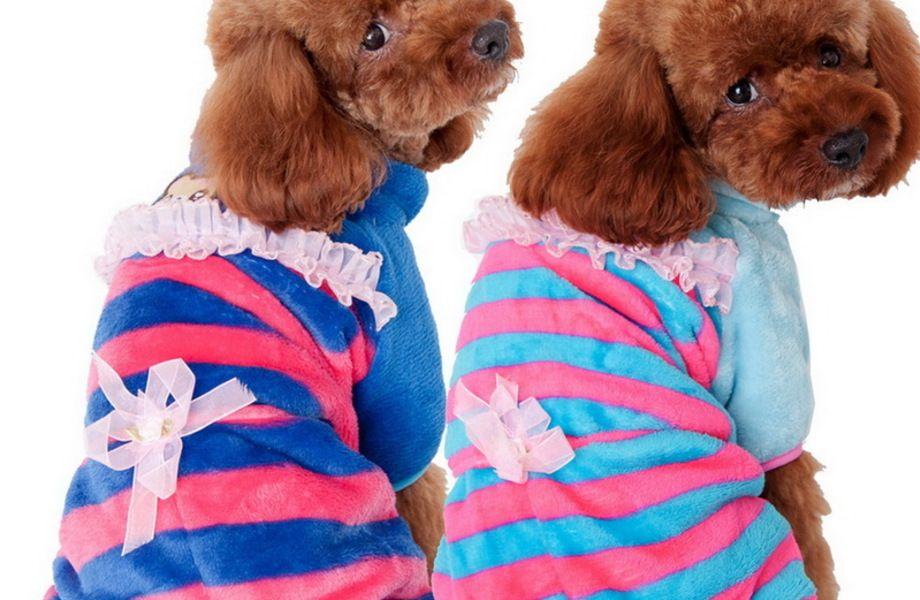 Бутик одежды для собак с оборотом 200 млн.