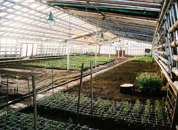 Теплица, выращивание зелени