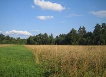 Земельный участок с теплицей для выращивания зелени.