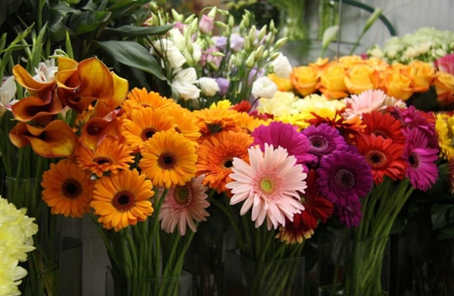 Два прибыльных магазина цветов