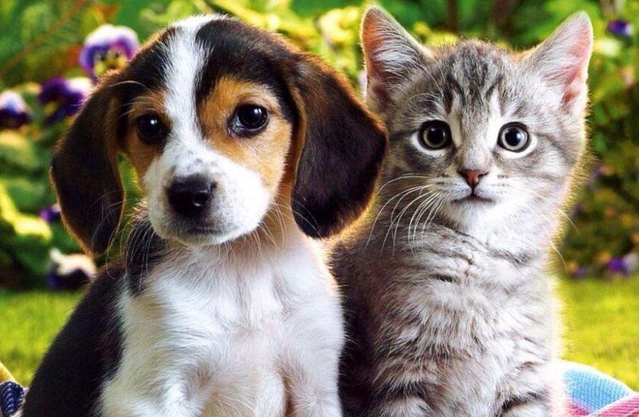 Доходный и Перспективный Зоомагазин и Ветеринарная аптека