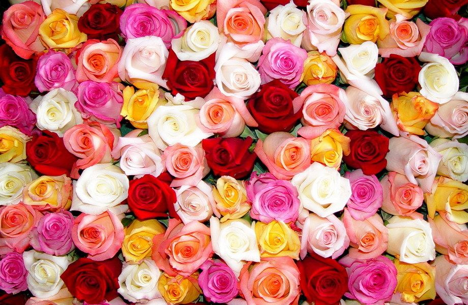 Сверх Прибыльный Цветочный онлайн магазин