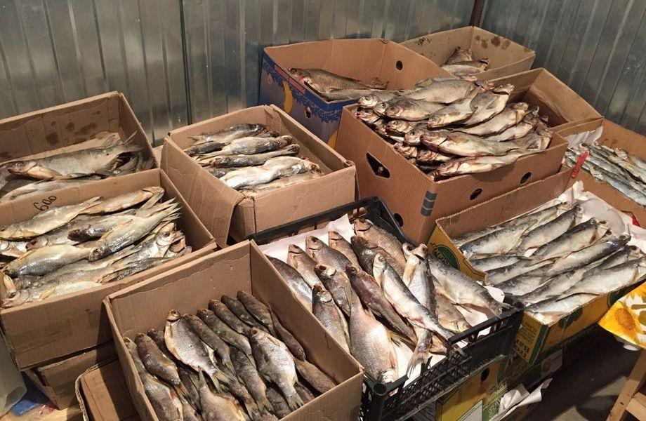 Рыбный Отдел продаж в Магазине