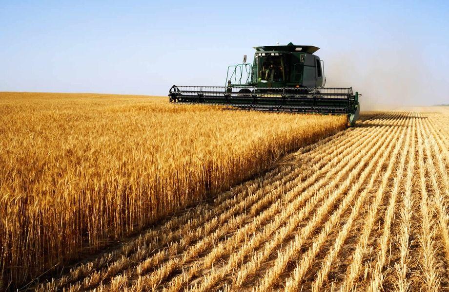 Крупное фермерское хозяйство