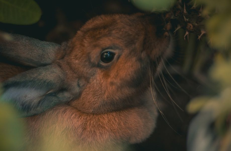 Крупная кроличья ферма в собственность