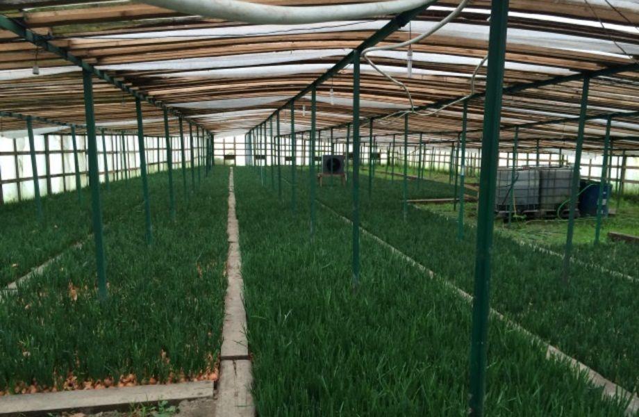 Луковая Ферма в Всеволожском Районе с Товарным Остатком
