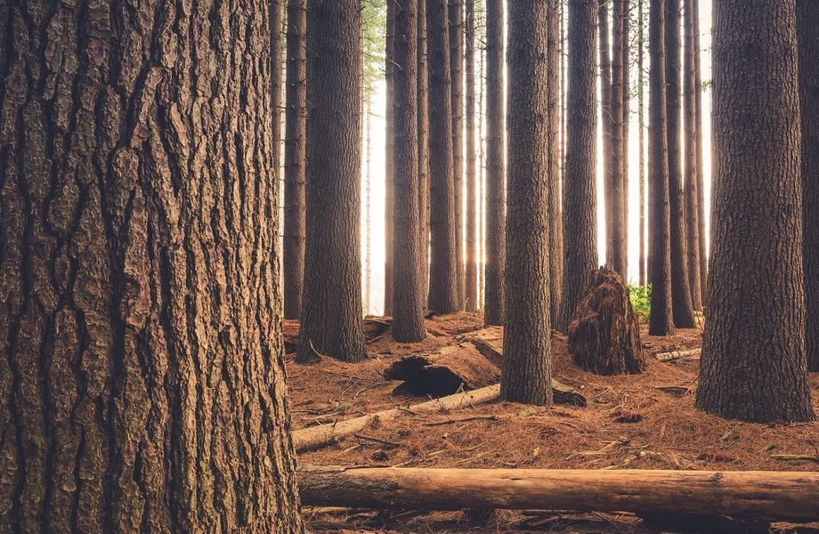 Мощное деревообрабатывающее предприятие в области