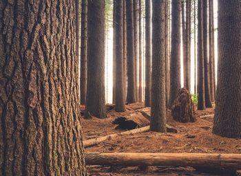 Питомник хвойных деревьев в собственность/охраняемая территория