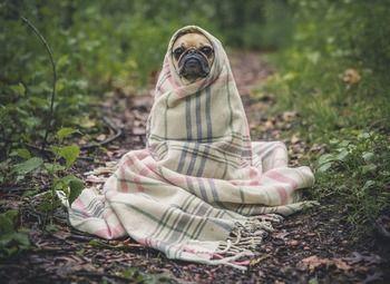 Онлайн магазин одежды для собак