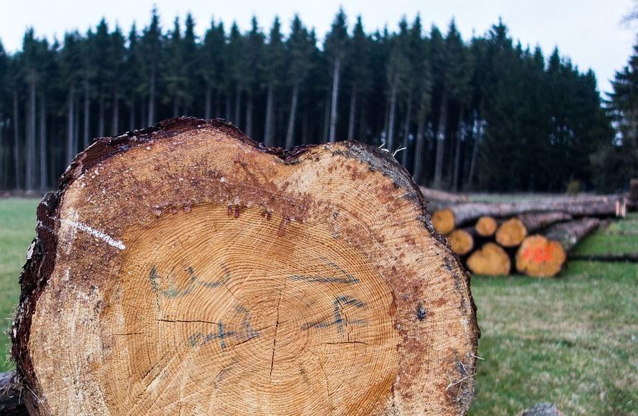 Деревообрабатывающее предприятие по цене активов
