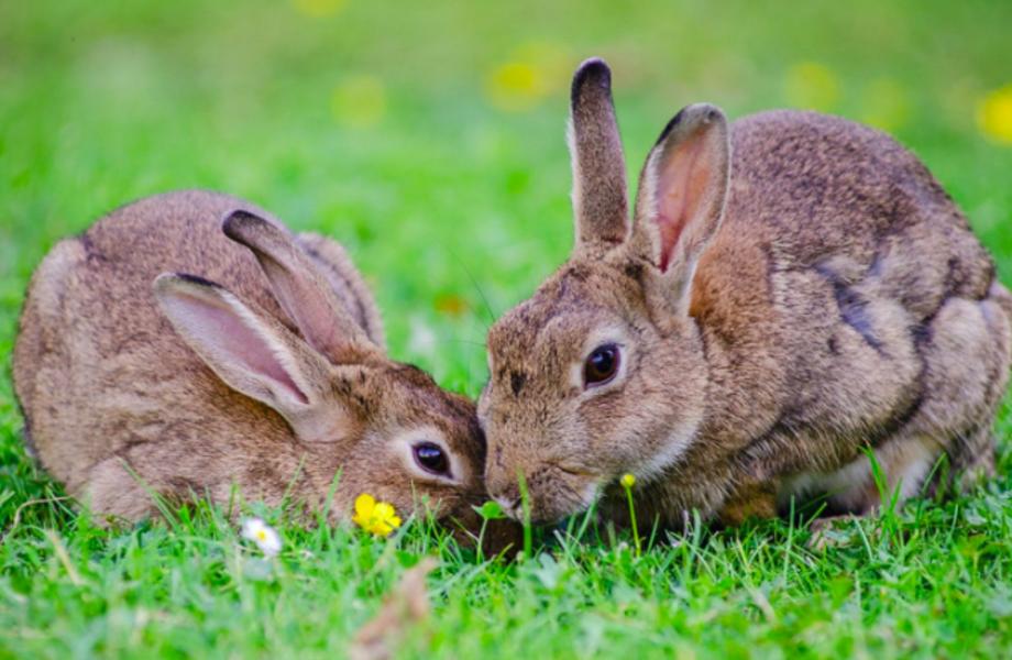 Выгодный крольчатник