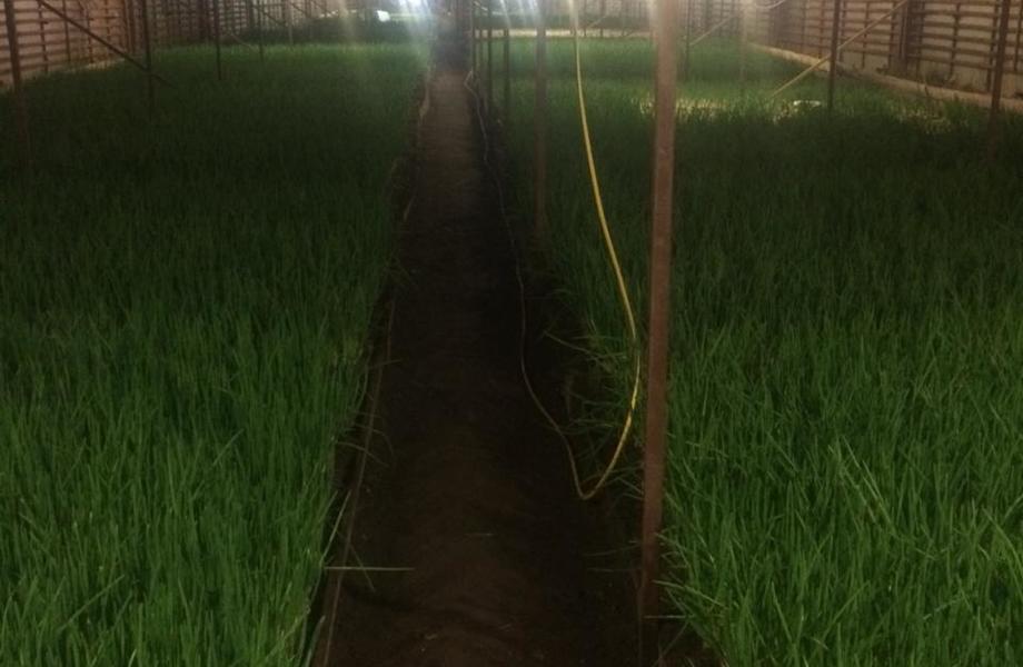 Луковая ферма с гарантированным сбытом