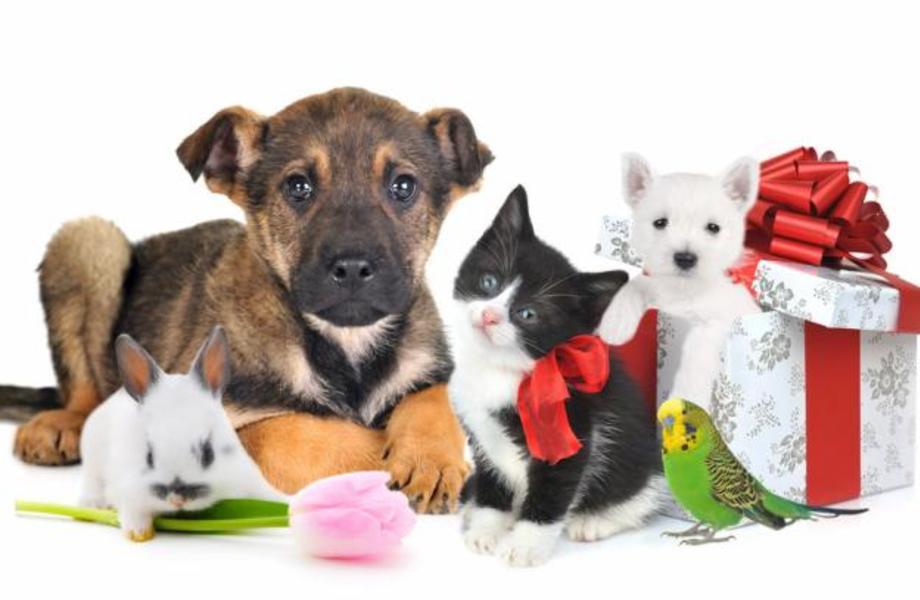 Интернет магазин товаров для животных
