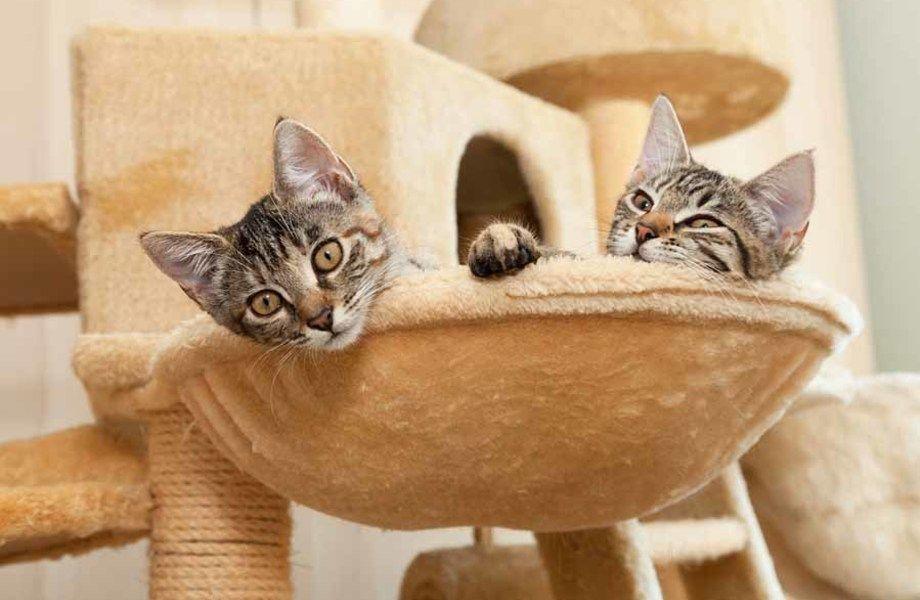 Отель для домашних кошек