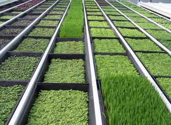 Производство микрозелени в центре