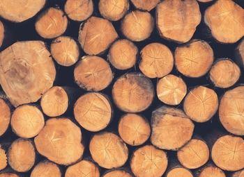 Прибыльное лесопильное производство и производство дров