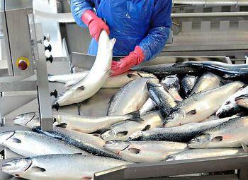 Действующий Рыбоперерабатывающий комбинат