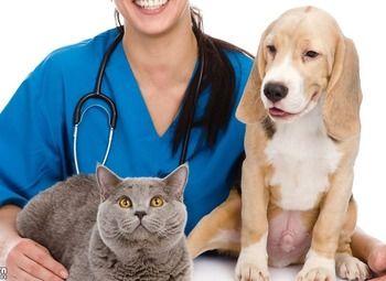 Прибыльная ветеринарная клиника в оживленном районе