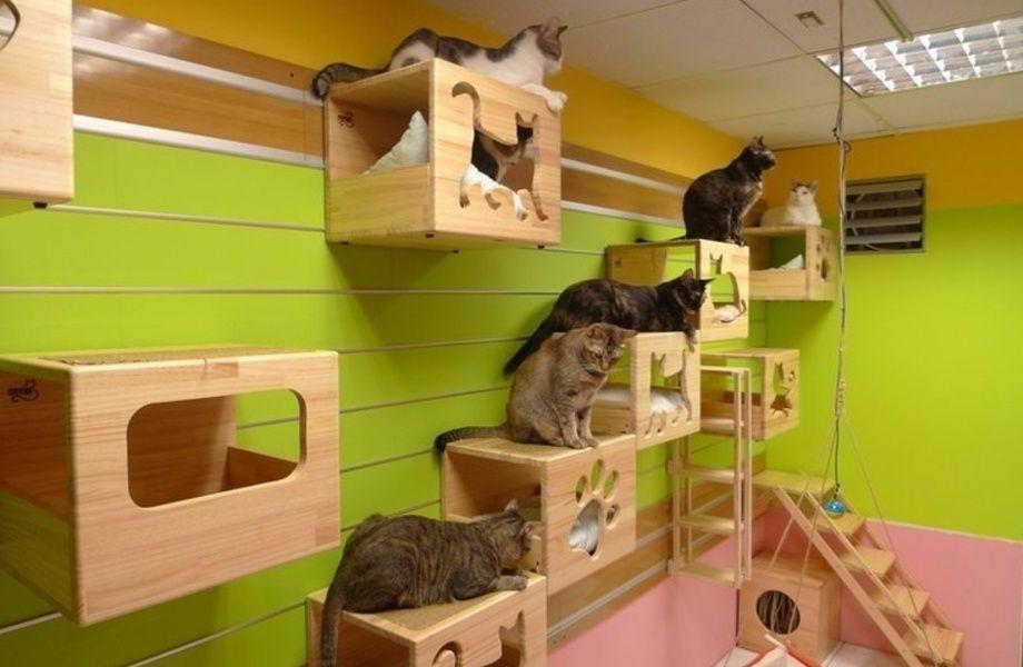 дизайн комнаты для кошек фото айфоне
