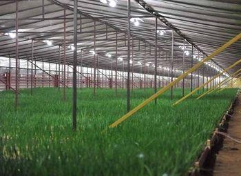 Тепличный комплекс по выращиванию лука/доход 200.000