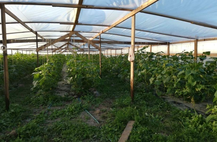 Фермерское хозяйство с новым оборудованием