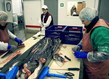 Предприятие по переработке рыбы/доход от 100.000