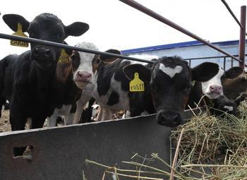 Доля в сельском хозяйстве по выращиванию скота