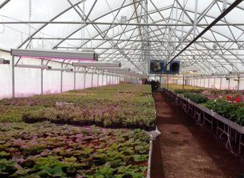 Ферма с зимней теплицей в 30 км от города со скважиной