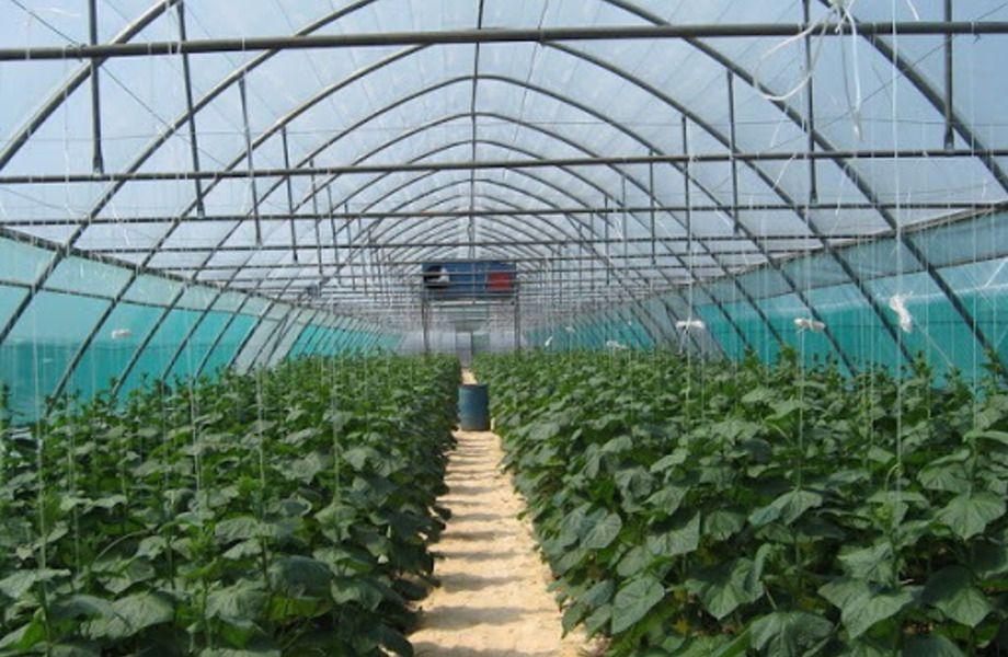 Тепличное хозяйство в Ломоносовском районе