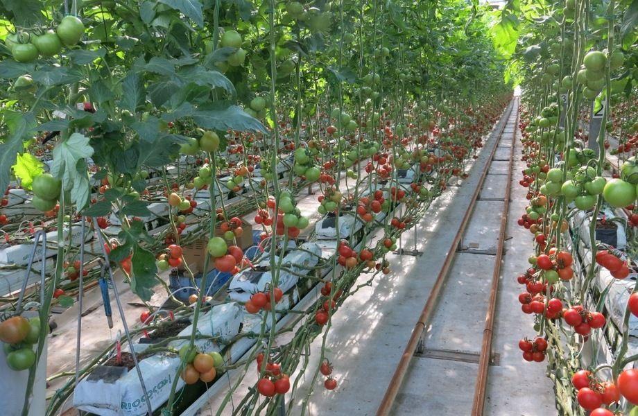 Прибыльная ферма по выращиванию овощей