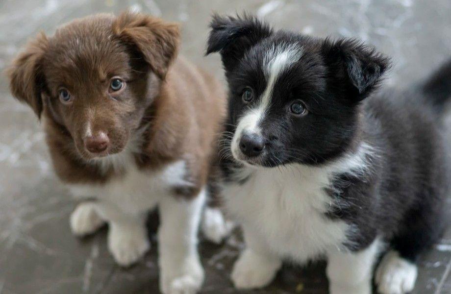 Интернет магазин товаров для животных с хорошей стабильной прибылью