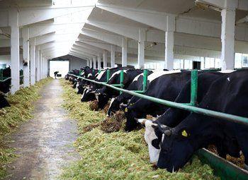 Основа молочно-животноводческого комплекса на 1200 коров с землей