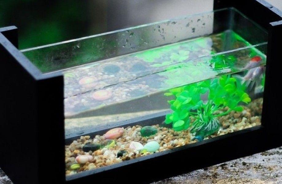Действующий прибыльный интернет магазин аквариумов и террариумов