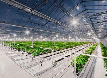 Прибыльное хозяйство с овощехранилищем с подтвержденной прибылью