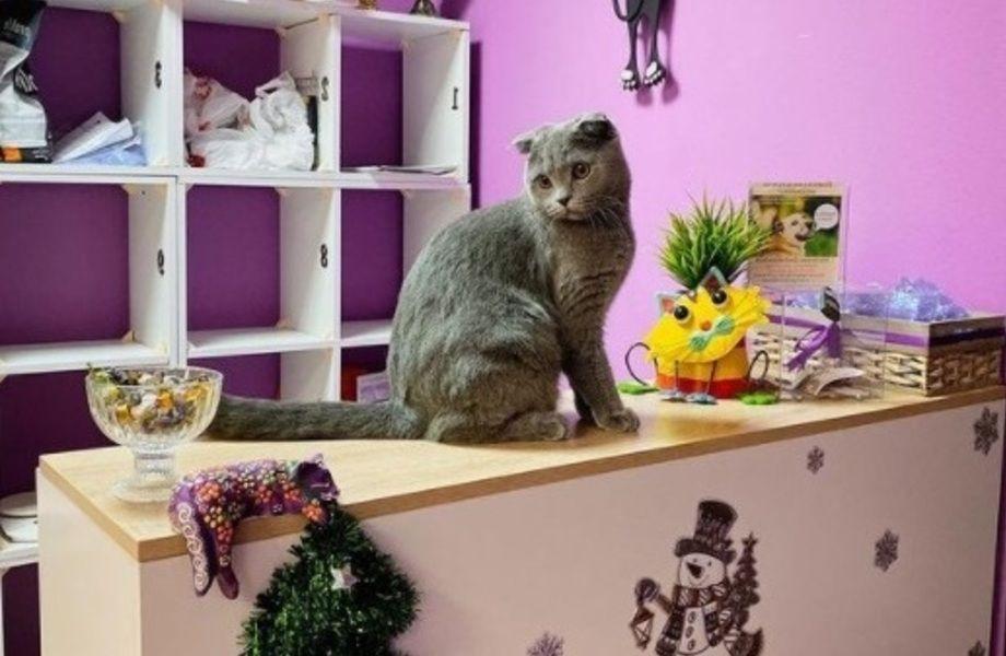 Гостиница для кошек на 30 номеров (бизнесу 3 года)