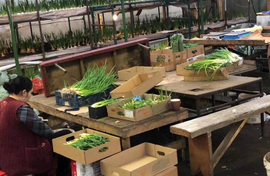 Доля в прибыльной луковой ферме