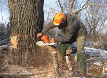 Сайт по спилу деревьев в условиях застройки
