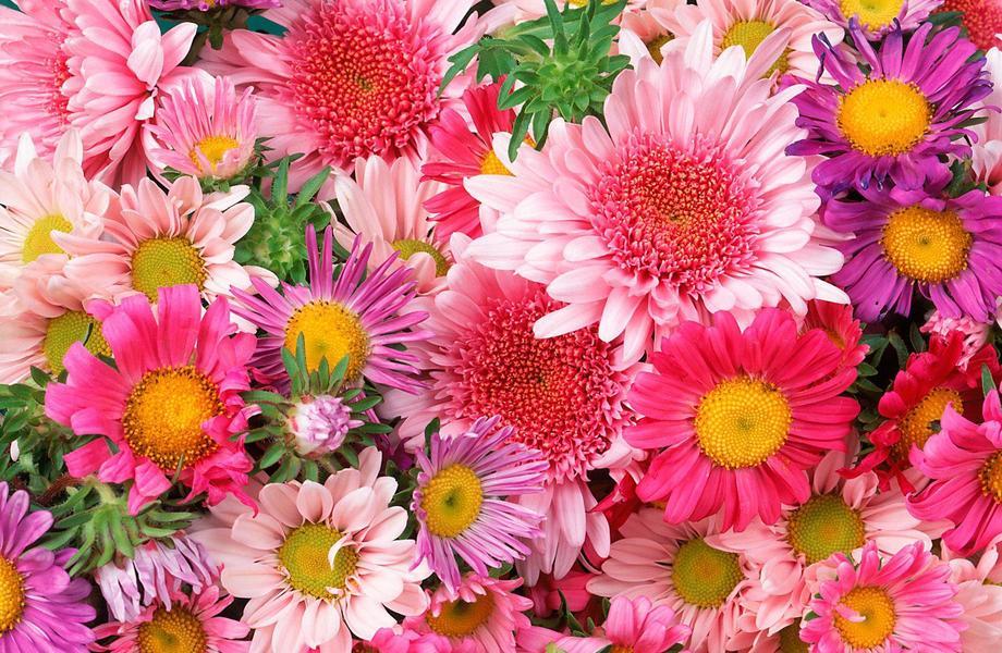 Цветочный магазин в 5-ти минутах от метро