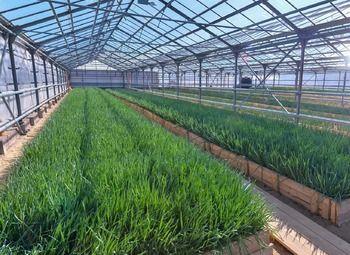 Доходный бизнес по выращиванию зелени