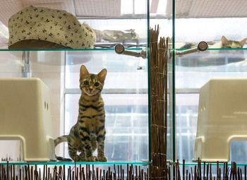 Гостиница для кошек и собак с очень низкой арендой
